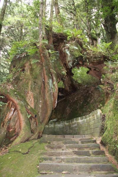 La porte des arbres, Taiwan, juillet 2010 (photo Weixuan Li)