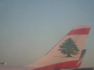 L'aile du cèdre du Liban (photo Sylvie Dallet)