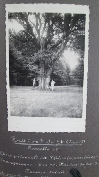 forêt de ST Avold (1936)