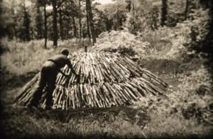 Le travail du bois-Coupes forestières (photogramme Fréderic olland)