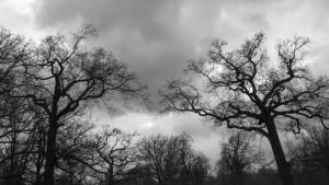 Photo prise dans le bois de Vincennes