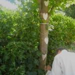 Sylvie et l'arbre aux coeurs