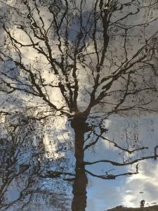 Arbre celeste @Masson