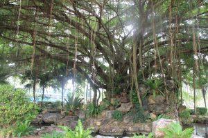 4 bouddha arbre echevelé