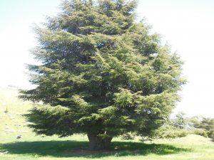 L'arbre du sommet du monde 1-2